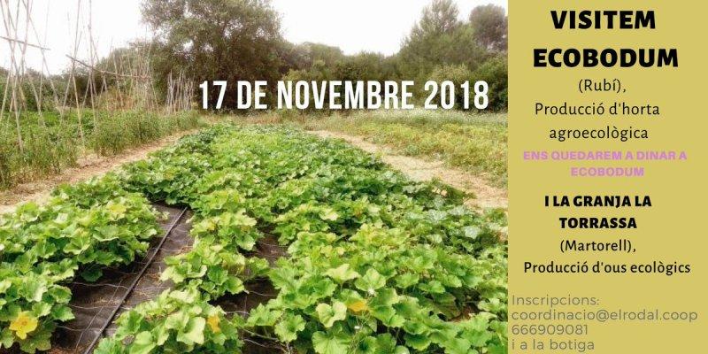 Visita a Ecobodum i El galliner de la Torrassa