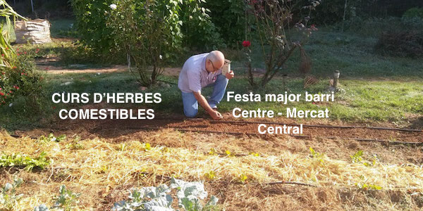 taller de jardineria comestible