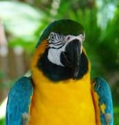 macaw-722976_640