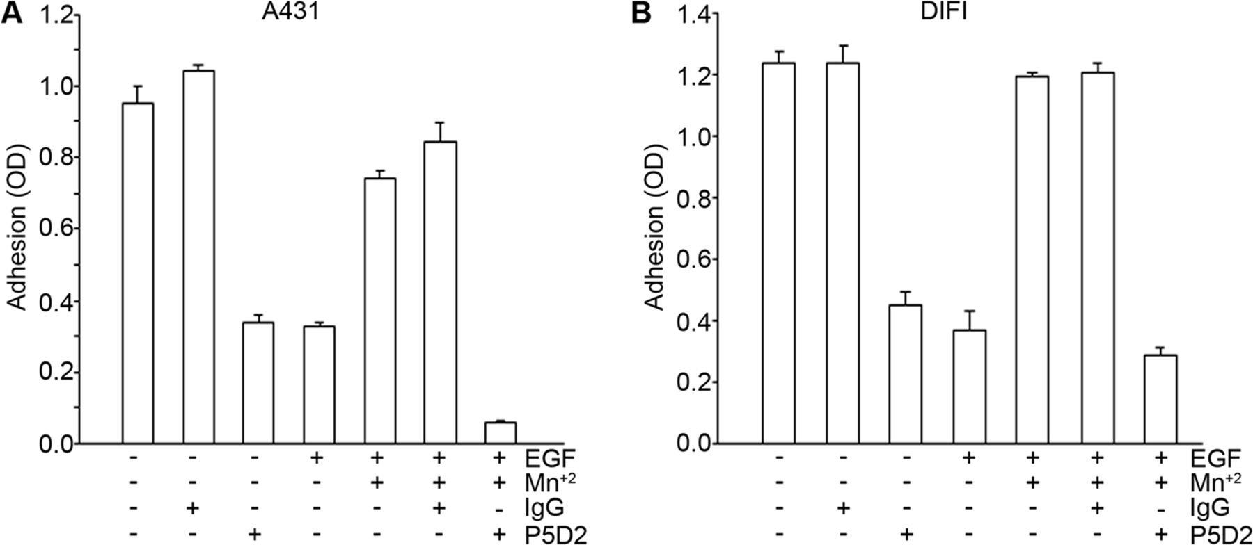 epidermal growth factor egf regulates