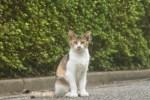 野良猫を保護したい!野良猫を飼う時に注意すべき点4つ!