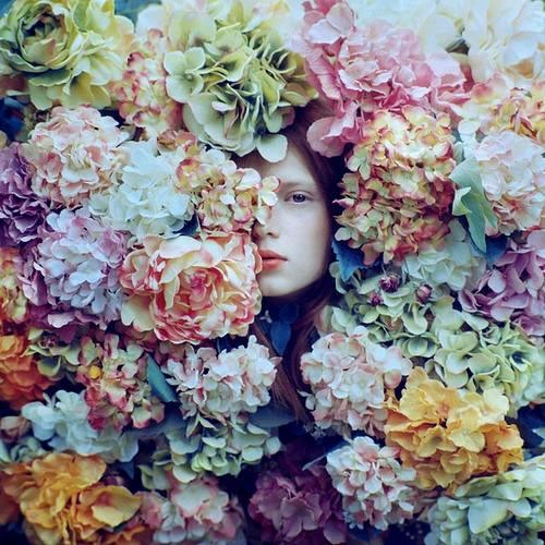 Hydrangea by Oprisco
