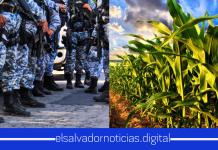 Tierras usurpadas por el FMLN con capacidad de 300 Millones de dólares en produccion son rescatadas por Nayib Bukele