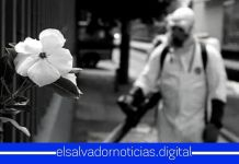 Pandemia COVID-19 en El Salvador supera los 21,993 casos confirmados, detectando 349 nuevos contagios en las últimas horas