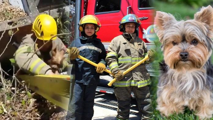 Los bomberos salvan a perrito en situación peligrosa. Los bomberos de El Salvador están dispuestos a salvar a cualquiera que esté en peligro