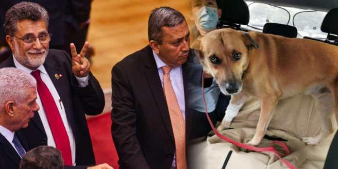 Denuncia a diputados salientes de robarse a Canelo, la mascota de la Asamblea Legislativa...