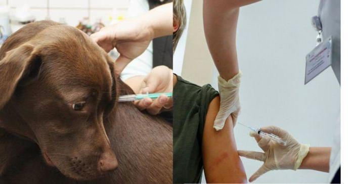 Chile | Vacunaron a más de cien personas contra el COVID-19 con dosis de uso veterinario