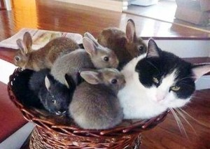 Gato y conejitos