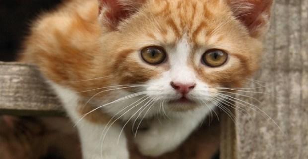 mi gatito tiene gusanos, ¿puedo conseguirlos?