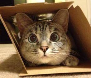 Feliway - gato en caja - mudanza