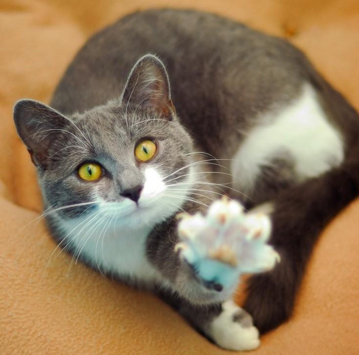 gatito1
