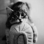 Gato sofá - evitar arañazos