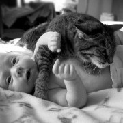 Gatos y bebés con Feliway