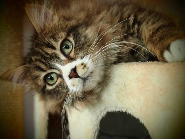Feliway ayuda a tu gato con su miedo a los ruidos