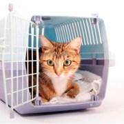 Feliway y el Gato en el transportín