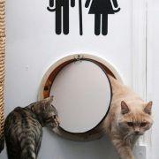 Gato arenero - Feliway