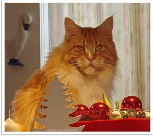 Feliway - Navidades gatunas