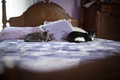 Feliway - casas con más de un gato