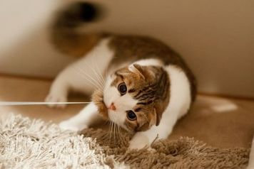 gato juegos adecuados