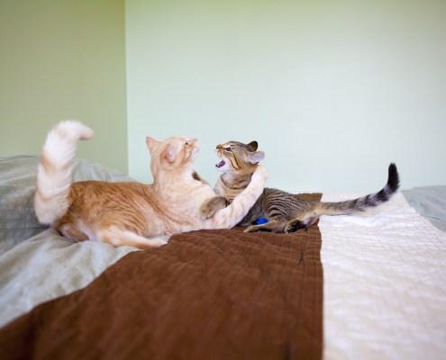 FELIWAY® FRIENDS ayuda a tus gatos a llevarse bien entre ellos reduciendo la tensión y los conflictos que puedan haber en casa.