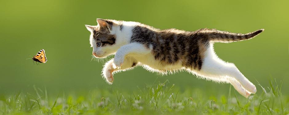 Gato feliz y saludable
