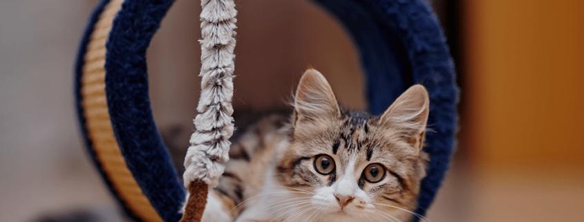Cuando has decidido adoptar un gatito adquieres una responsabilidad.