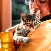 ¿Cómo debo cuidar de un gato con hipertensión arterial?