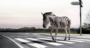 zebra-crossing-l