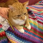 Ginger cat on crochet blanket