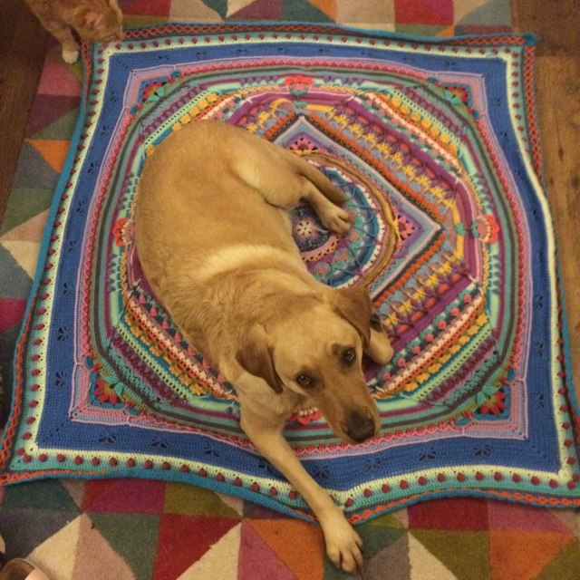 Poppy the labrador sitting on Sophie's Universe blanket