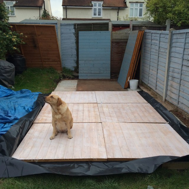 Dog helping build a shed