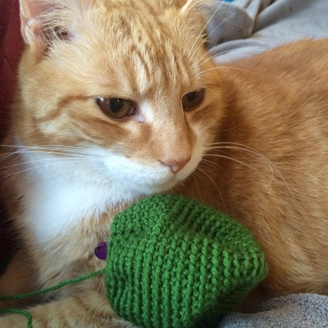 cat helping with crochet