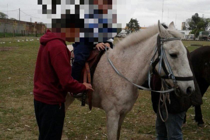 Denuncian robo de un caballo usado para Equinoterapia
