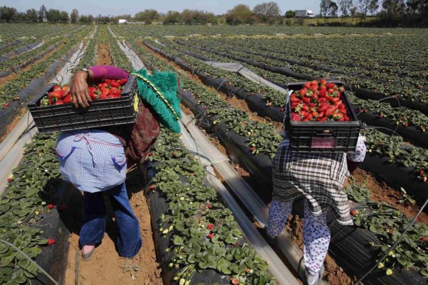 El gobernador Manzur celebra la apertura del mercado de Estados Unidos a la frutilla de Tucumán