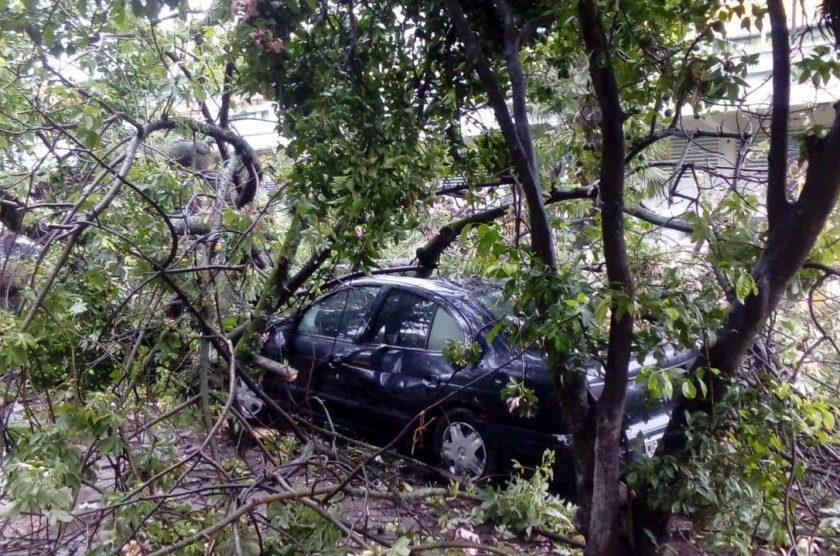 Un añoso árbol cayó sobre dos autos frente al Hospital de Niños
