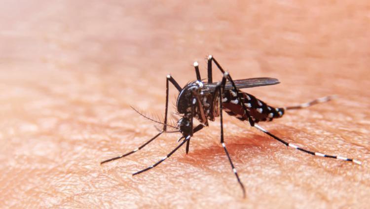 TUCUMAN: Ya son 55 los casos confirmados de dengue
