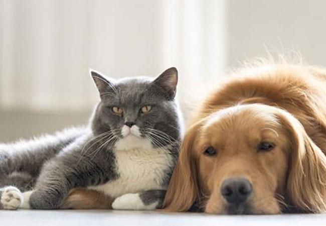 Una ciudad china prohibió el consumo de perros y gatos