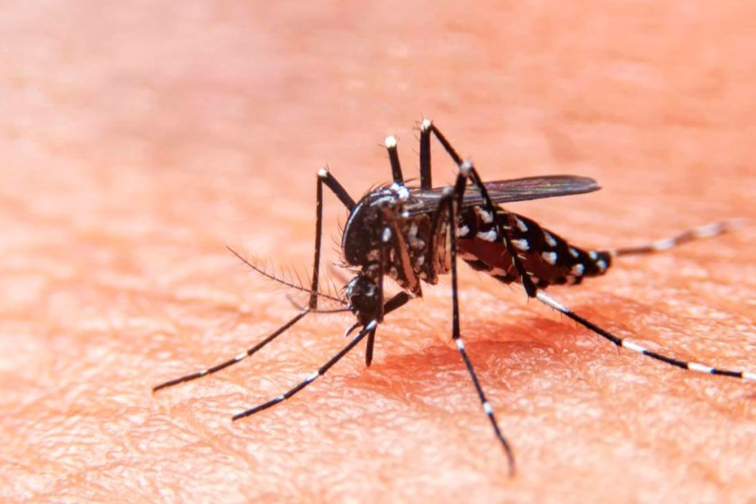 TUCUMAN: El dengue se cobró una nueva víctima, se trata de una mujer de 46 años y ya son 4 los muertos