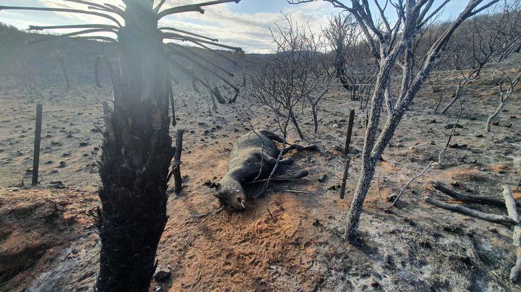 CORDOBA: Los Incendios no cesan, desgarradoras imágenes