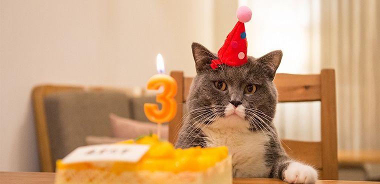 """"""" Increible """": Festejaron el cumpleaños del gato y se contagiaron de covid"""