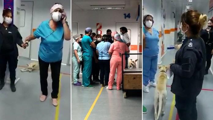 BUENOS AIRES: Esposan a una enfermera por no extraer sangre a un preso(VIDEO)