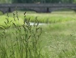 Soñar con hierbas