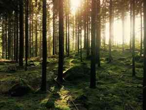 significado de soñar con bosque