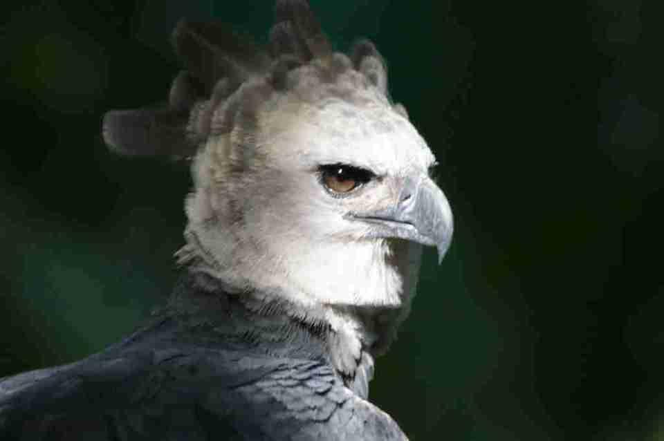 sueños con águilas grandes
