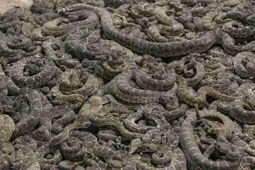 soñar con ver muchas serpientes