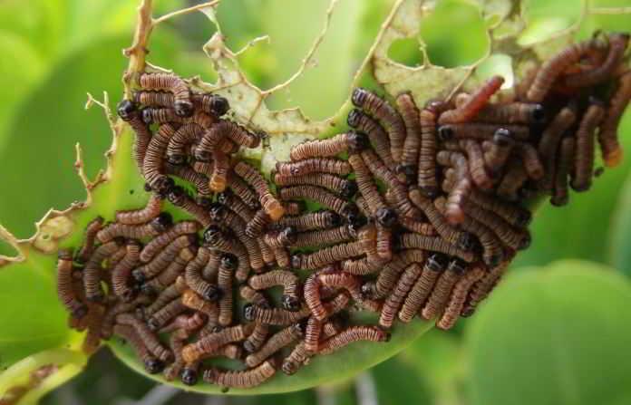 Soñar con muchos gusanos