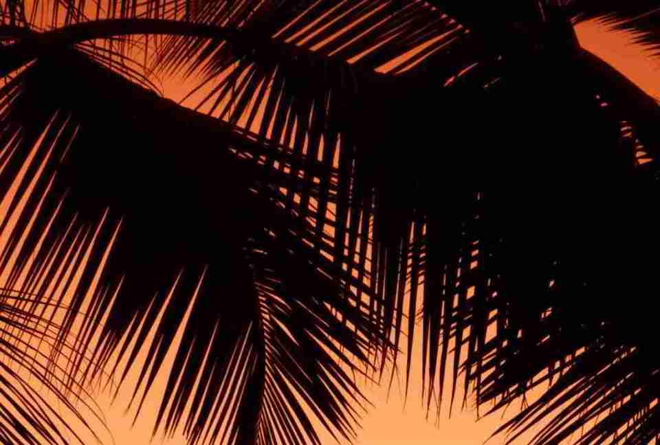 soñar con palmeras muy altas