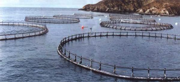 Industria del salmón (foto Terram)