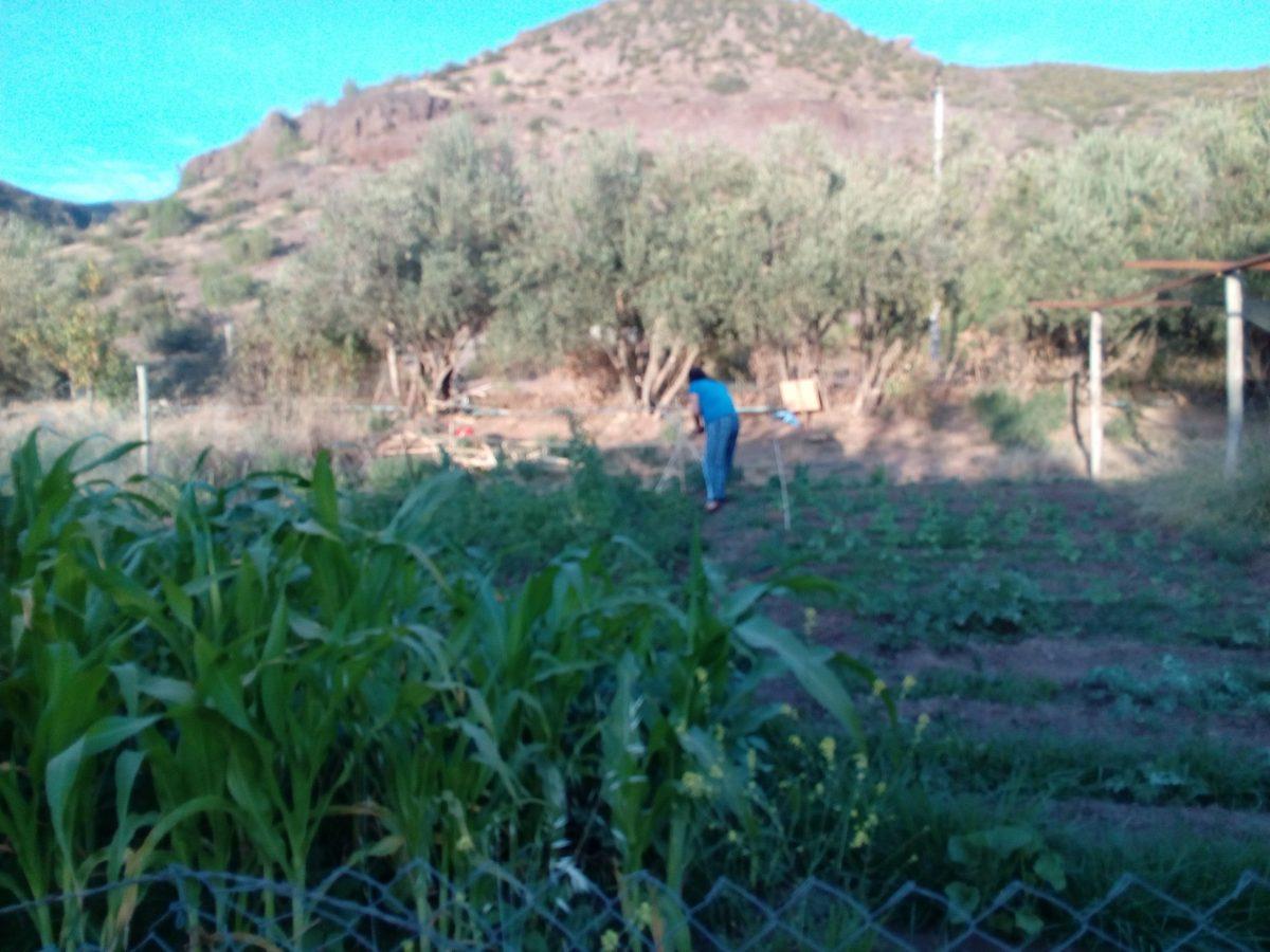 Campesinos de Coquimbo