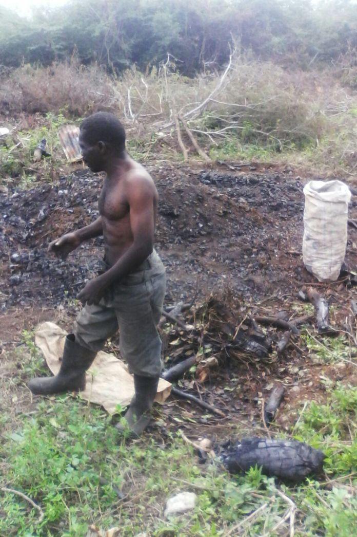 haitiano-en-carbonera